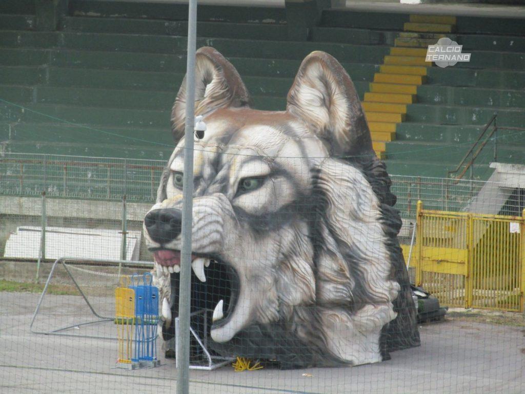 Il lupo all'entrata del campo dell'Avellino